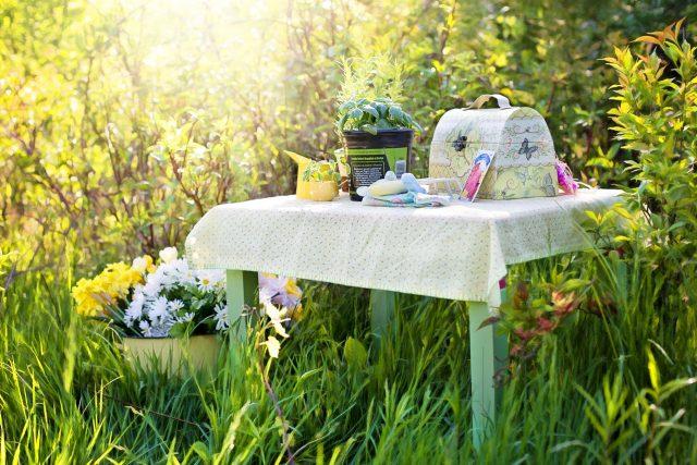 Zakládáme bylinkovou zahradu. Bylinky bez chemie (ilustrační foto)