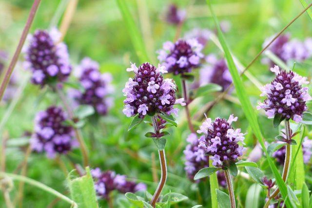 Zakládáme bylinkovou zahradu. Bylinky bez chemie  (ilustrační foto) | foto: Fotobanka Pixabay