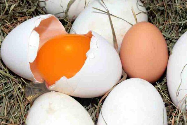 vajíčka, vejce, žloutek, slepice, žlutá a bílá