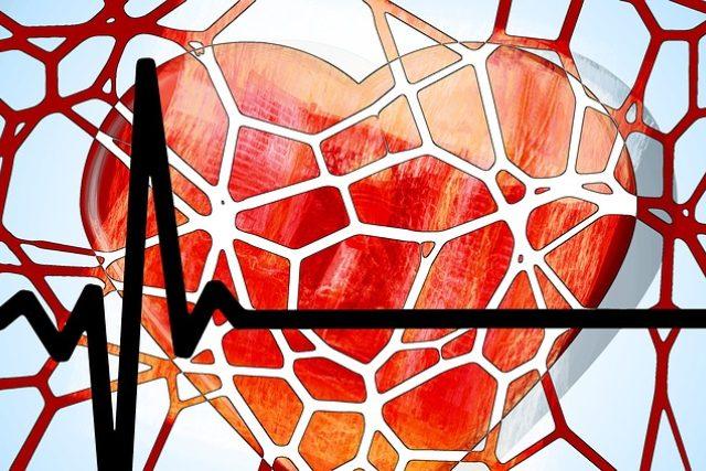 Srdce a cévy (ilustrační foto)