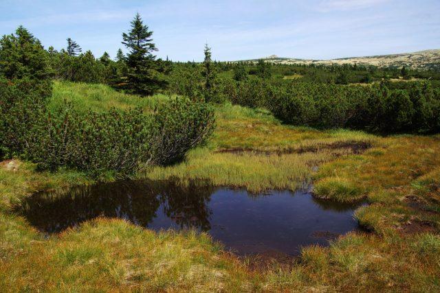 Pančavské rašeliniště