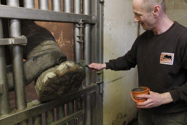 I sloni potřebují pedikúru. Trojice královédvorských slonů na ni chodí ochotně | foto: Simona Jiřičková