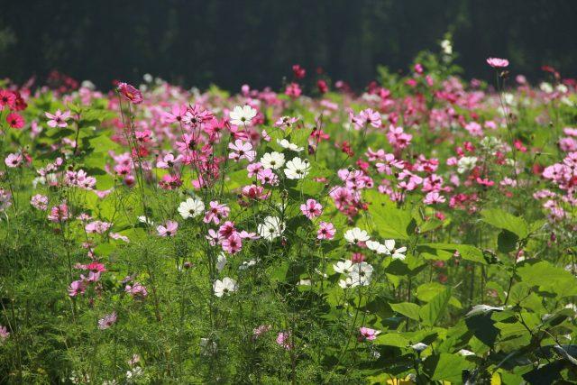 Zahrádka. Květy nás vždy potěší