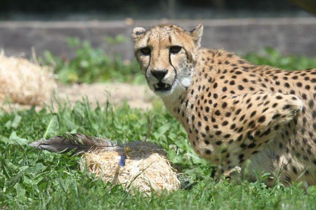 Gepardům můžete pomoci u tak, že odevzdáte svůj starý elektrospotřebič