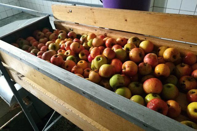 Jablka, moštárna Smržice