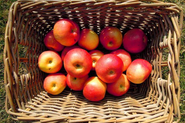 Jablka budou letos zřejmě dražší než mandarinky nebo i banány (ilustrační foto)