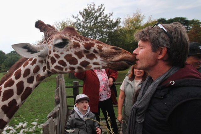 Víte,  jak chutná polibek od žirafy? Herec Jan Šťastný vám to poví | foto:  ZOO Dvůr Králové