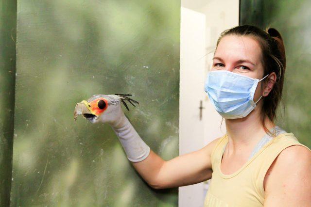 Hadilov a maňásek. Ošetřovatelku Veroniku Ležákovou zachytil fotoaparát při krmení