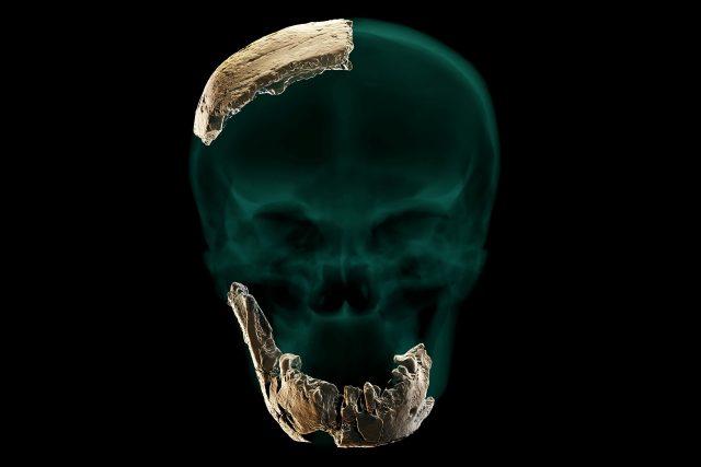 Ostatky nového druhu člověka Nešer Ramla Homo nalezené v Izraeli   foto: Profimedia