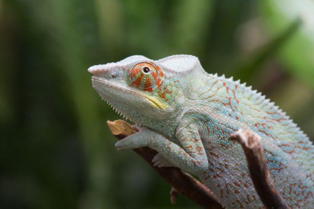 Novinky Madagaskaru a Konga v Safari Parku Dvůr Králové