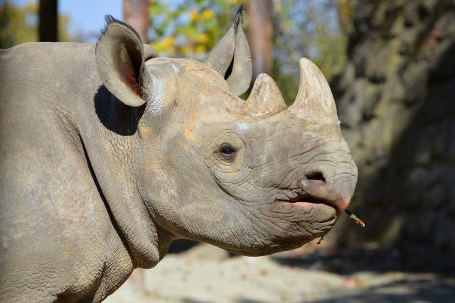 Nosorožci v Safari Parku Dvůr Králové