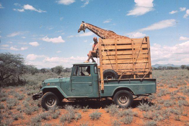 Josef Vágner na džípu se žirafou v bedně | foto: archiv Lenky Vágnerové