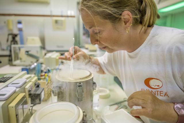Osud nosorožce bílého severního je v rukou vědců | foto: Biorescue project,  Avantea