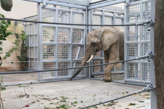 Slonice Sally a Umbu získaly novou parťačku a také nově zrekonstruovaný domov. Ten jim nabídne větší komfort než dosud. Vnitřní pavilon slonů prošel rozsáhlými úpravami | foto: Simona Jiřičková