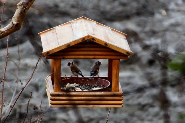 Když někam krmítko nainstalujeme, tak se tam většinou během dvou týdnů ptáci naučí léta
