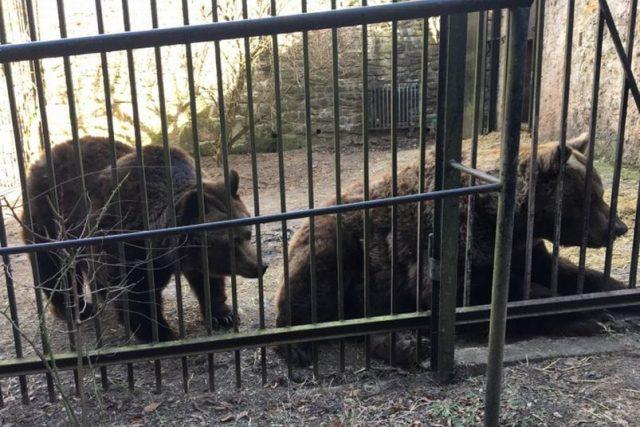 Náchodští medvědi se probudili ze zimního spánku