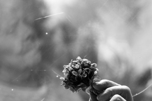 Kytička fialek,  stará žena,  babička,  ruka  | foto: Fotobanka Pixabay