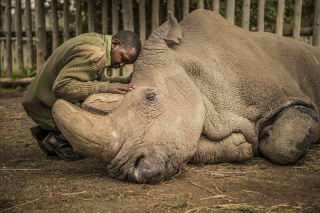 Nosorožec Sudán