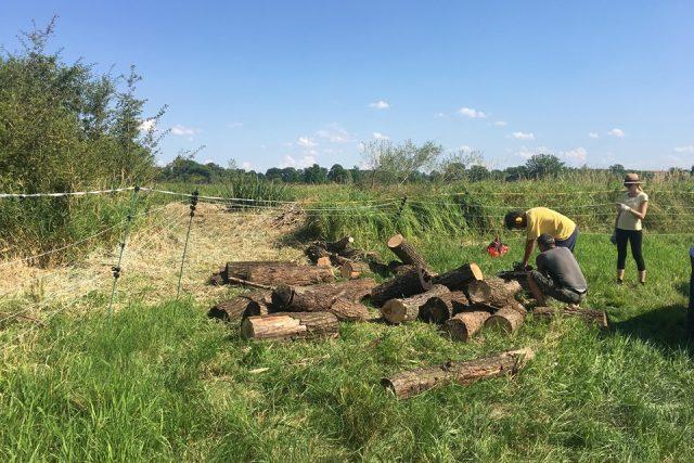 V ptačím parku Josefovské louky u Jaroměře se sešli dobrovolníci z celé republiky při údržbě tamního unikátního ekosystému