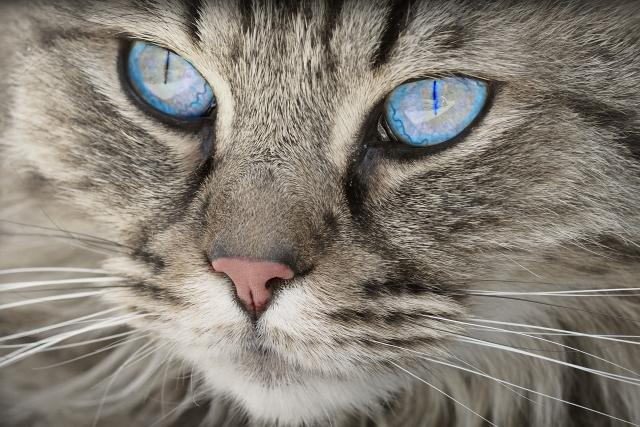 Kočka ví, že je člověk přítel