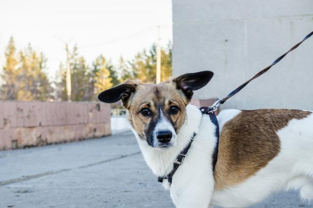 Samotné čipování psa nebolí  (ilustrační foto)   foto: Pixabay