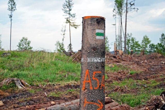 Následky vichřice Eberhard stále odklízejí lesníci v hradeckých Městských lesích (ilustrační foto)