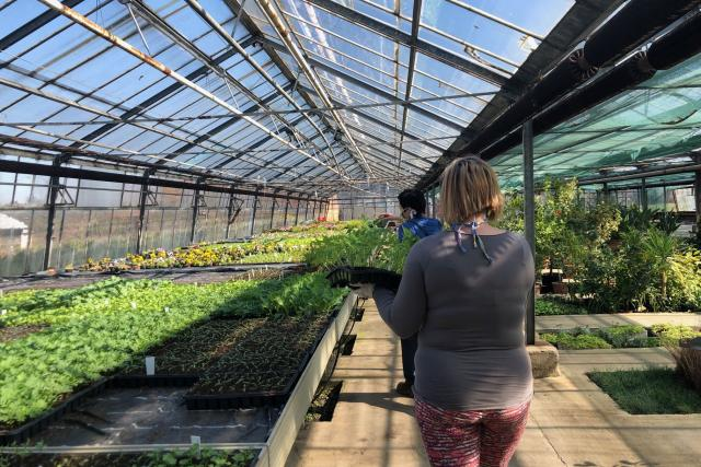 Ve sklenících zahradnické školy v Kopidlně jsou tisíce sazenic zeleniny a letniček,  které je potřeba přesadit | foto: Kateřina Kohoutová,  Český rozhlas