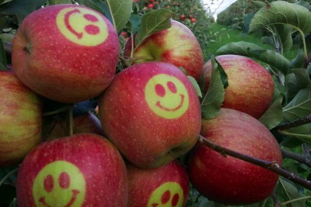Ani den bez jablka, to je heslo Martina Ludvíka