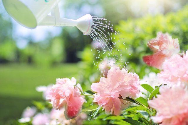 Zalévání je jedna z nejtíž naučitelných zahradnických prací  (ilustrační foto) | foto: Fotobanka Pixabay