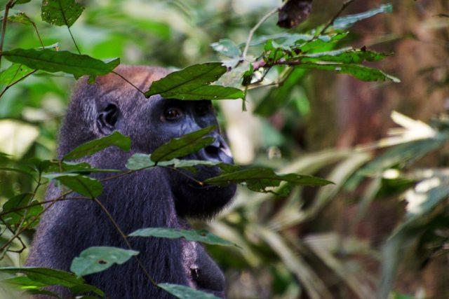 Do nejčernější Afriky nejen za gorilami. To je Gabon