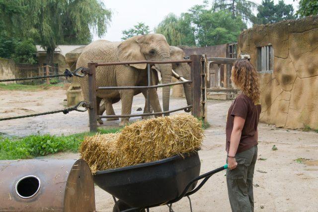 Pozvi zvíře na oběd! | foto: Safari Park Dvůr Králové