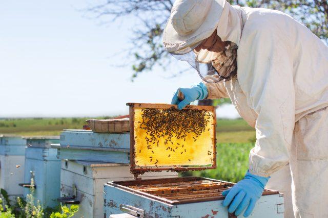 Co všechno lidstvu dávají včely? | foto: Shutterstock