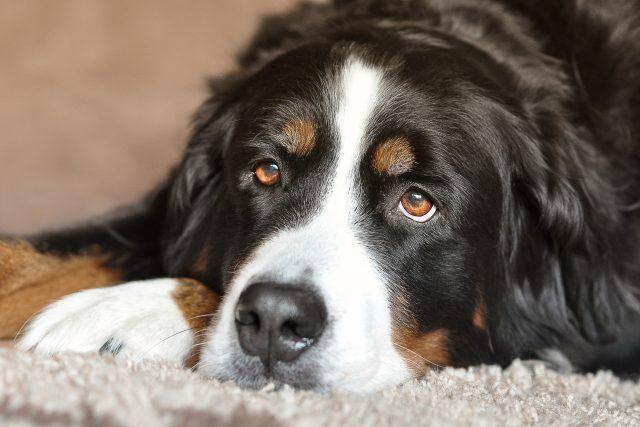 Pes  (ilustrační foto) | foto: Fotobanka Pixabay