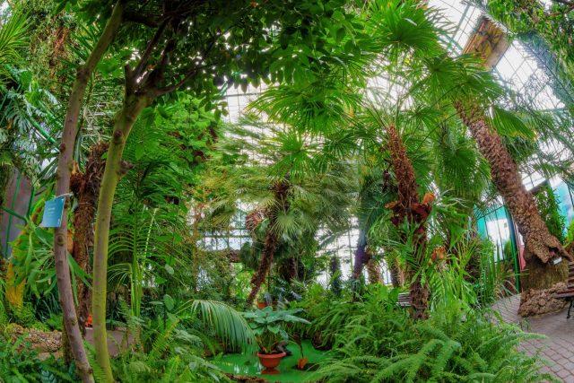 Palmový skleník polského zámku Książ