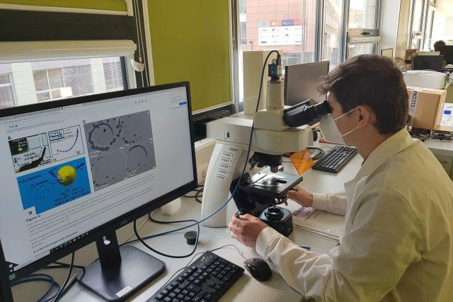Vědci vyvíjí robota,  který rozezná patogeny u rostlin  (ilustrační foto) | foto: Ivana Chatrná,  Český rozhlas