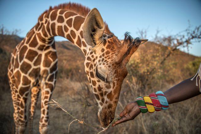Žirafí sirotčinec Sarara
