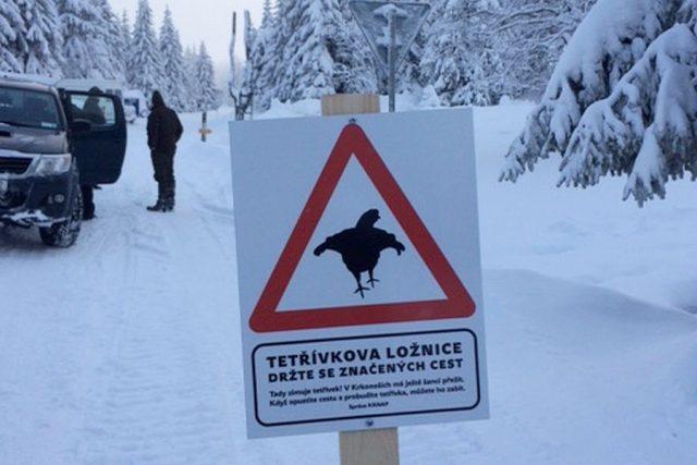 Strážci národního parku začali po Krkonoších instalovat tabule s informacemi o výskytu kriticky ohrožených tetřívků
