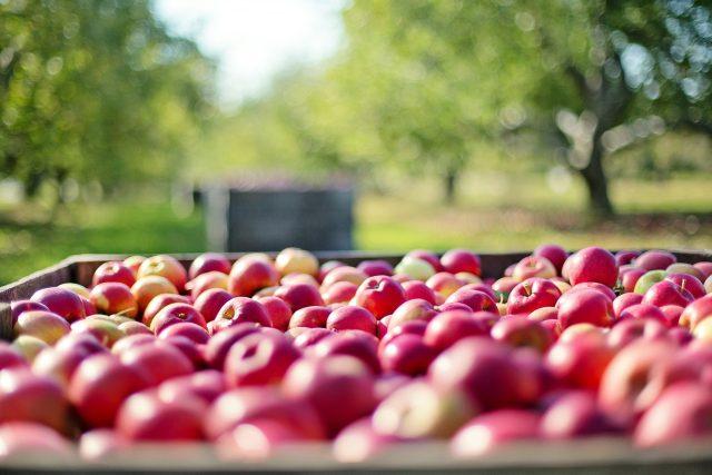 Jablka ve speciálních boxech v ZD Dolany vydrží čerstvá i několik let  (ilustrační foto)  | foto: Fotobanka Pixabay