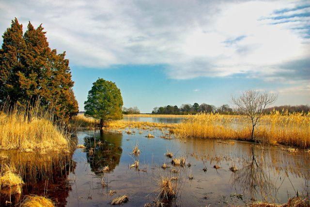 Mokřady pomáhají zadržet vodu v krajině (ilustrační foto)