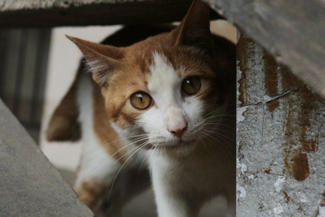 kočka | foto: Wallpaper Flare,  CC0 1.0